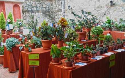 """El Circulo Floral de La Antigua presenta su exposición """"Llegó la Navidad"""""""