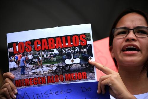 manifetación en contra del maltrato animal en Antigua Guatemala