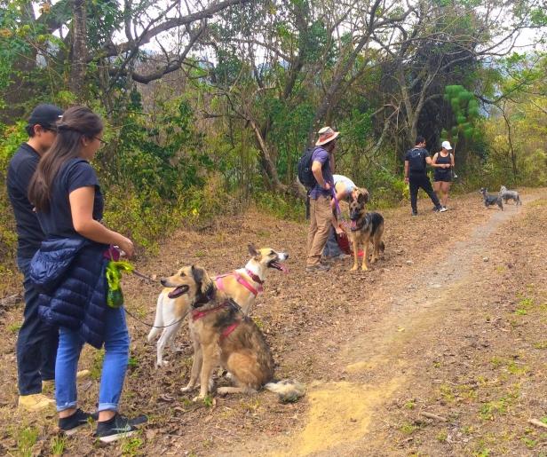 Un día de senderismo con tu perro en Finca El Pilar. Foto Chrissi's Dog Training.jpg