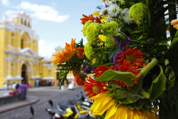 """Noviembre es declarado """"El mes de las flores en Antigua""""."""